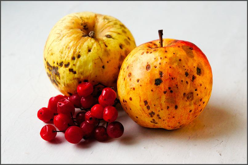 Яблоки и калина