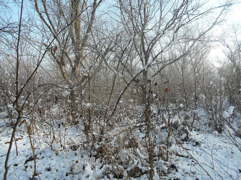 Начало Зимы, в походе, Природы снежное убранство ... DSCN0320.JPG