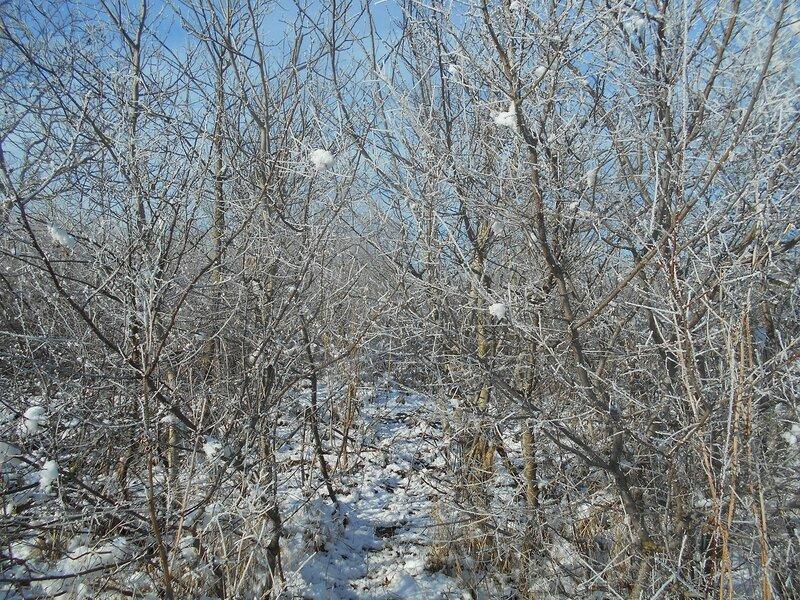 Начало Зимы, в походе, Природы снежное убранство ... DSCN0344.JPG