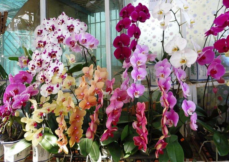 Орхидеи. Вьетнам - 2016. Фотографии Людмилы Осиповой 010.jpg