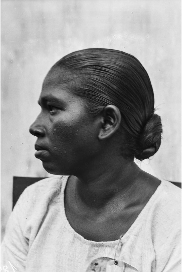 528. Горная сингалка из окрестностей Курунегала