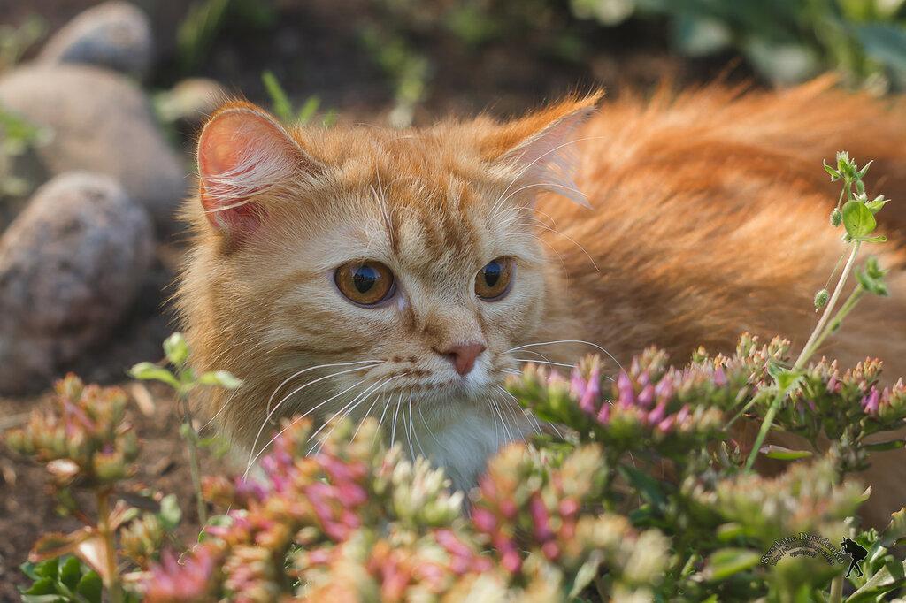 Наш любимый рыжий кот!