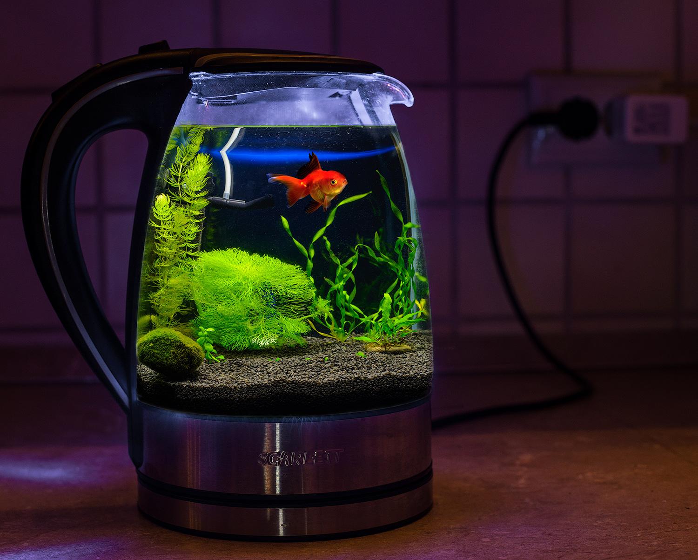 Мое видение креативного аквариума