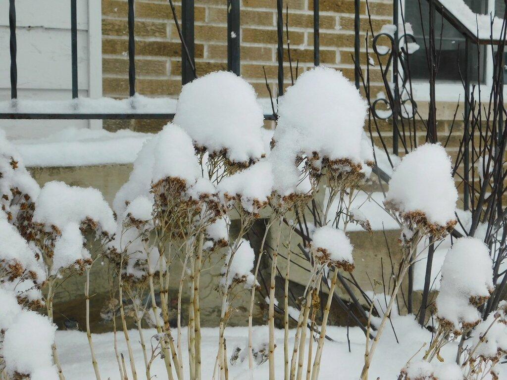 Первый день зимы.
