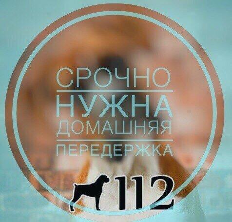 https://img-fotki.yandex.ru/get/196060/24701737.3e/0_1d165a_36cd89c_L.jpg