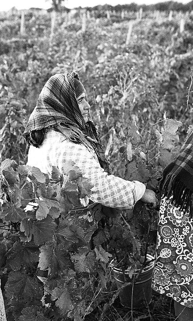Повседневная жизнь в советской Грузии 1976 года в фотографиях шведского фотографа