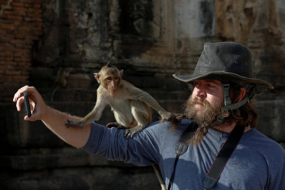 Артисты в обезьяньих костюмах дают представление перед туристами, город Ломбури, 27 ноября 2016.
