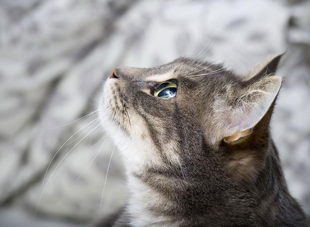 Кошка — крошечный лев, который любит мышей, ненавидит собак и покровительствует человеку. Оливе