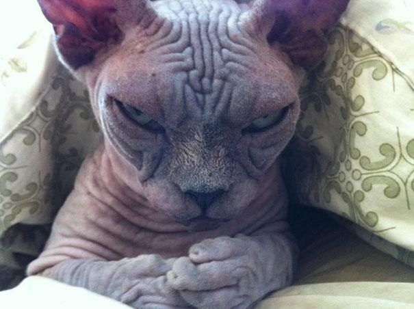 Дьявольский котик.