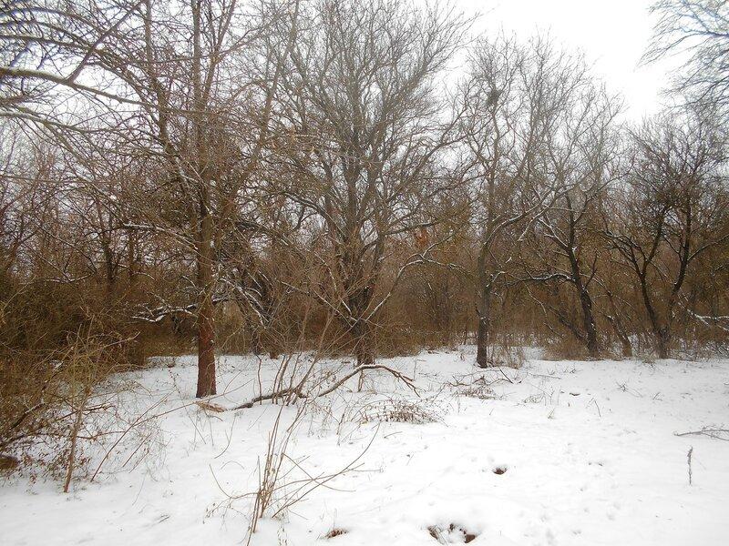 Лес, снег, Зима ... DSCN0821.JPG