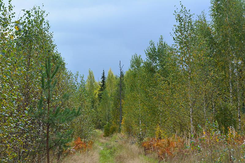 мой лес 16 дорога.jpg