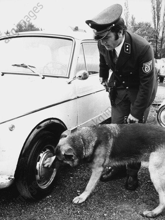 Rauschgift-Spьrhund in Mьnchen/Foto 1973 - Sniffer dog in Munich / Photo 1973 -