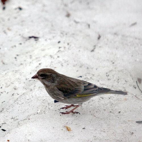 птичка1.jpg