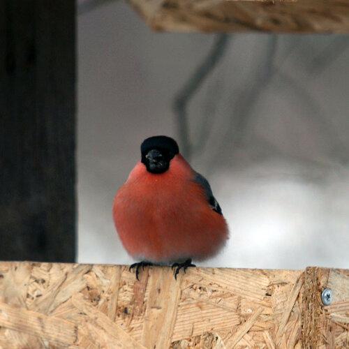 птичка13.jpg