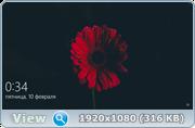 Windows 10 Pro (X86) BY SLO94 v.09.02.17 [Ru]