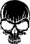 Скелет-484.jpg