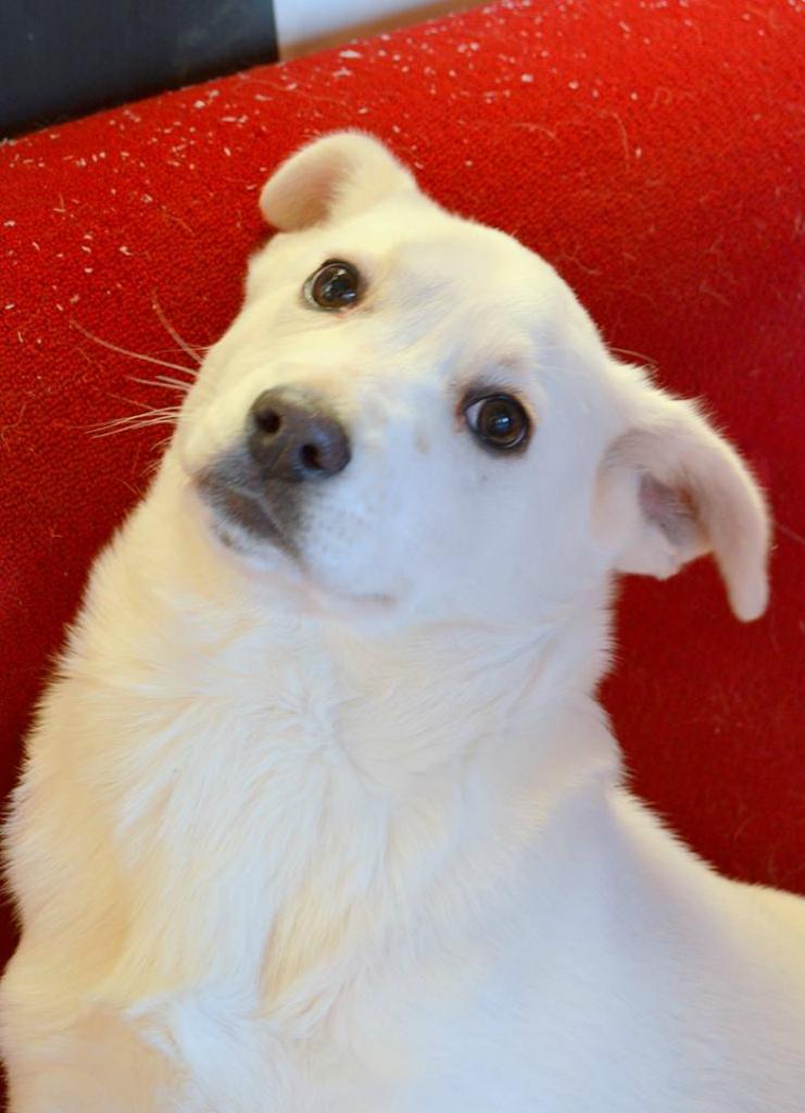 Снежка собака из догпорта