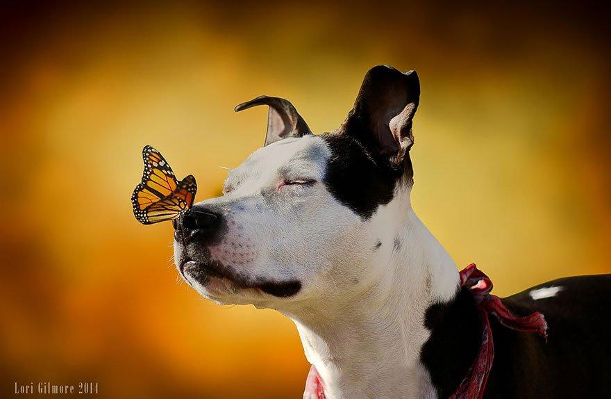 Милые животные и великолепные бабочки (20 фото)
