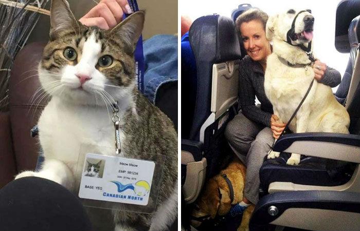 Авиакомпания нарушила свои же собственные правила и позволила пассажирам лететь с животными. Более 8