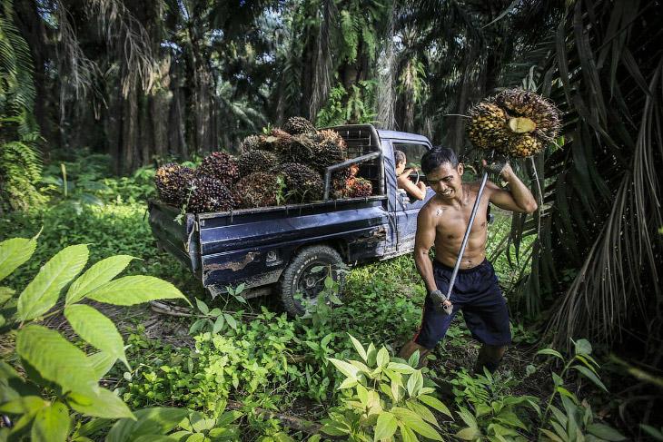 Главные оптовые скупщики пальмового масла — корпорации, такие, как Nestle и Unilever. Кроме про