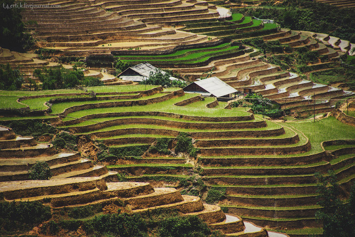 Земледелие как искусство (43 фото)