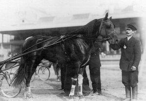 Конь - победителй соревнований на Семеновском плацу.