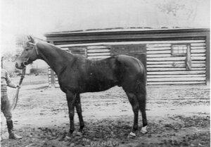 Лошадь Бренди, победитель приза сравнения великого князя Николая Николаевича.