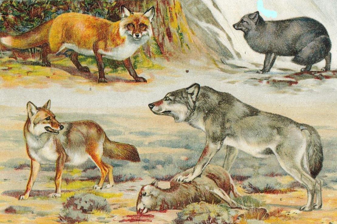 Генетики отыскали общего предка собак