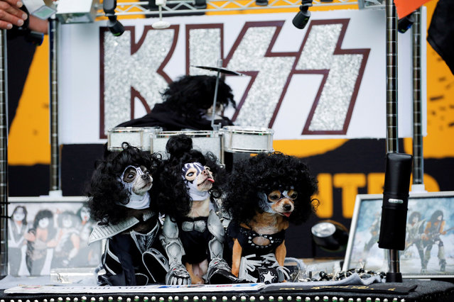 Dogs dressed up like the rock band Kiss take part during the annual halloween dog parade at Manhatta
