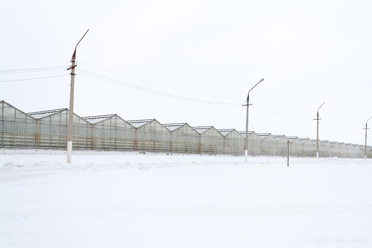 Агрокомплекс Волга выращивание огурцов фото 3