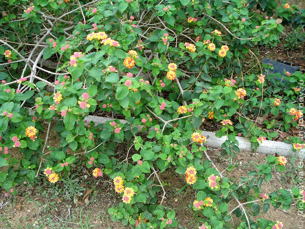 растения в тунисе