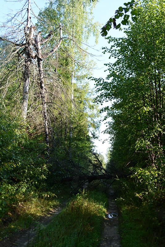 леса бурелом 2.jpg
