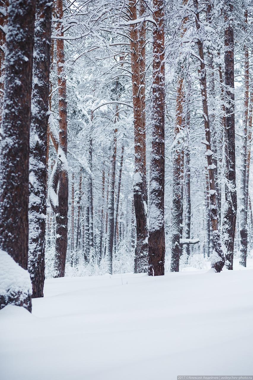 Золотой бор (154 км) зимой
