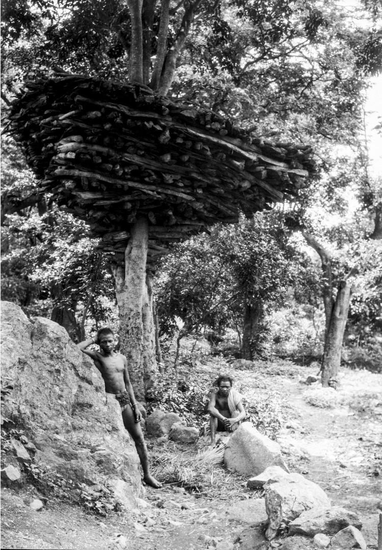 693. Орисса. Двое мужчин возле дровяного склада на дереве