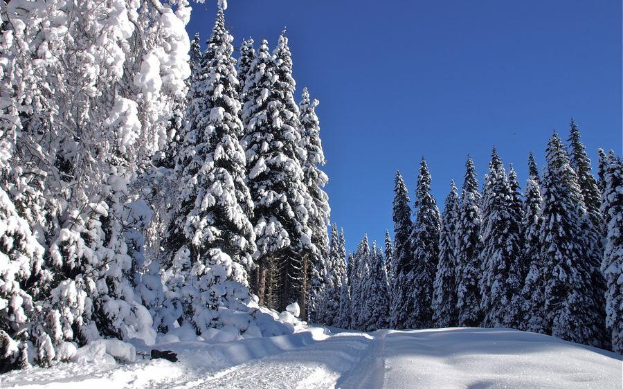 Зима фото рабочий стол