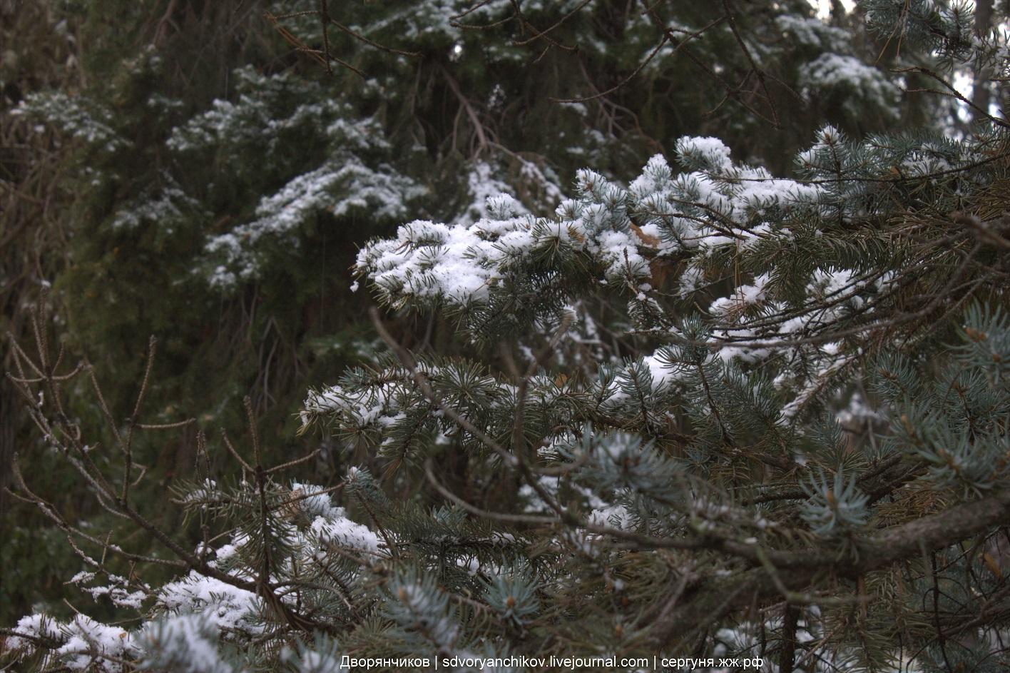 Первый снег во второй раз - Волжский - Парк ВГС - 2 ноября 2016