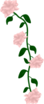 SSS_Roses_Element-1.png