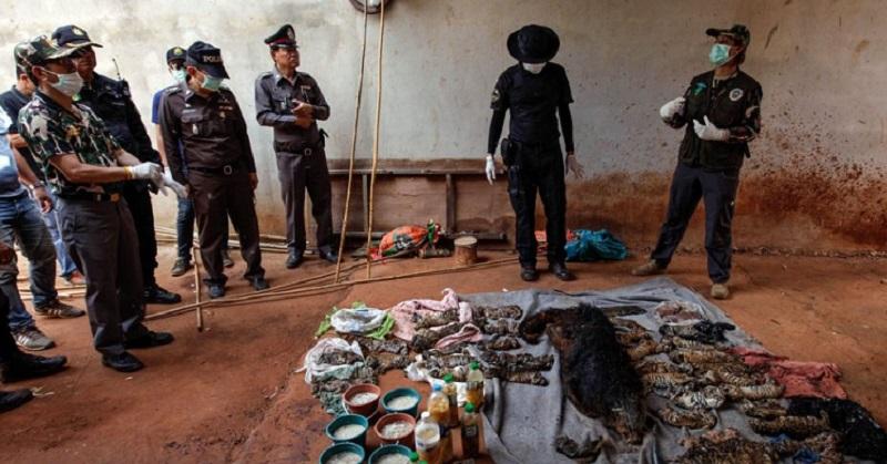 Душераздирающая находка в таиландском монастыре. Вот что было в морозильной камере… (4 фото)
