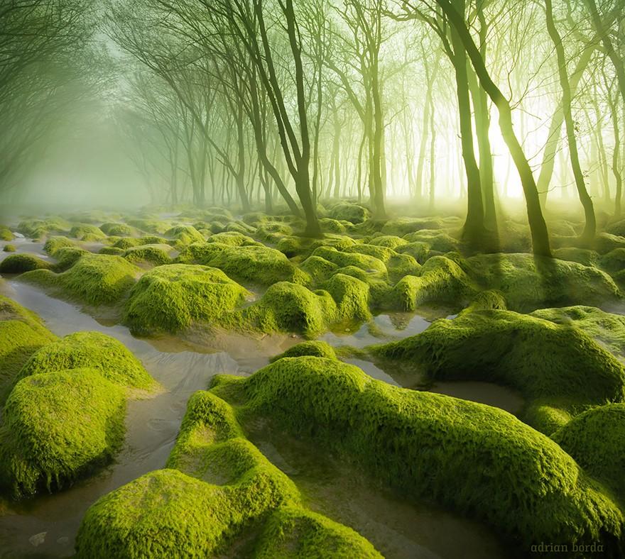 3. Мшистые болота. (Фото: Адриан Борда)