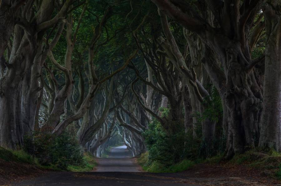 5. Буковая аллея Дарк Хеджес, Северная Ирландия.