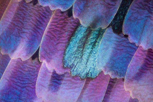 4. Крылья бабочки