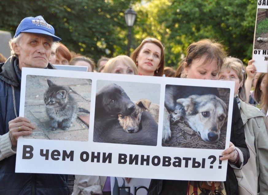Пикет стребованием реального наказания для живодерок прошел вХабаровске
