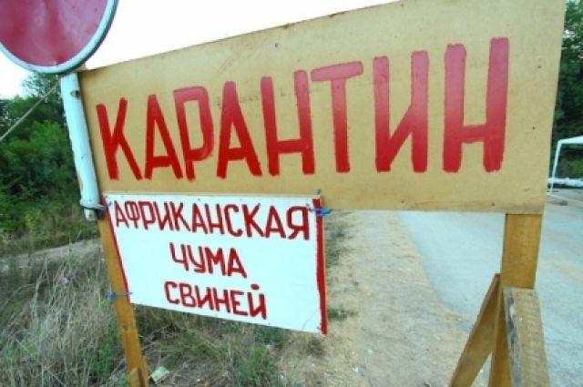 Россельхознадзор предложил властям Кубани ввести карантин из-за АЧС