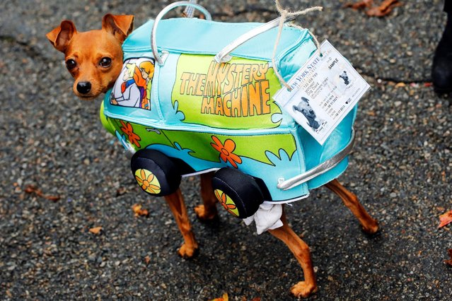 A dog takes part in the annual halloween dog parade at Manhattan's Tompkins Square Park in New
