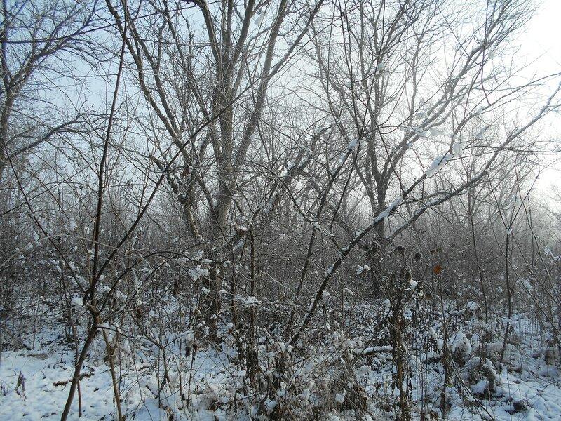 Начало Зимы, в походе, Природы снежное убранство ... DSCN0302.JPG