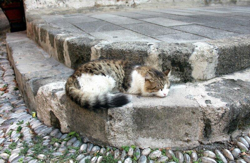 IMG_7642-Коты1.jpg
