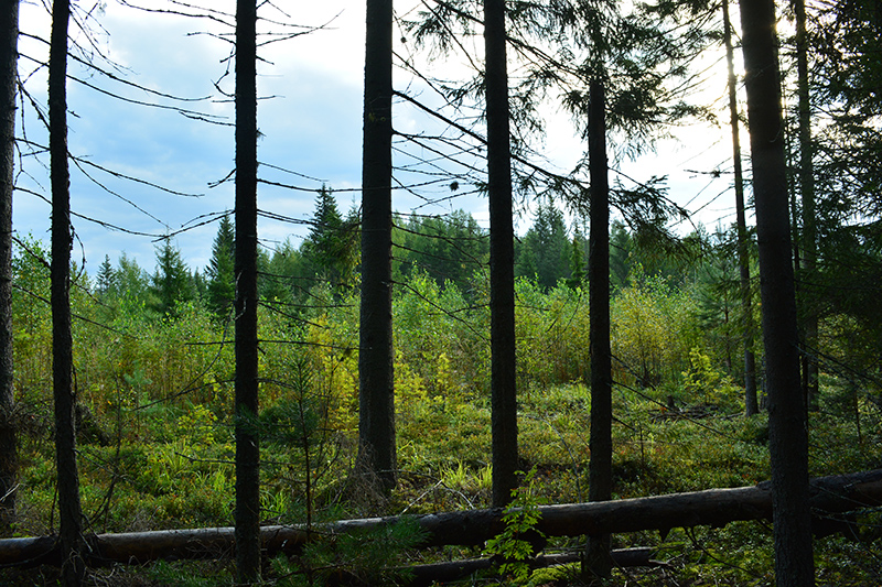 леса 16.jpg