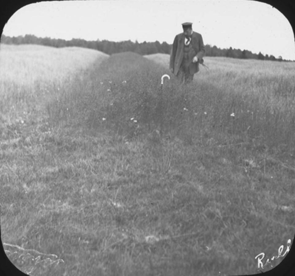 19. Профессор Артур Ячевский осматривает поле льна. Деревня Рыльково