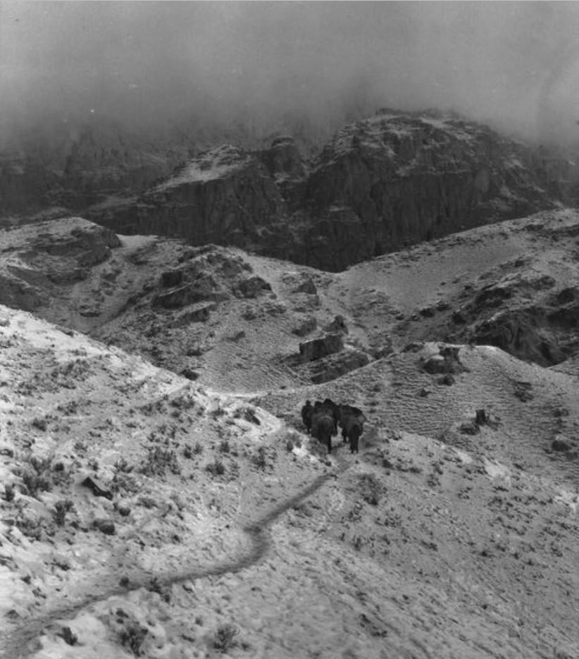 Караван экспедиции преодолевает горный перевал между Кельпином и Учтурфаном
