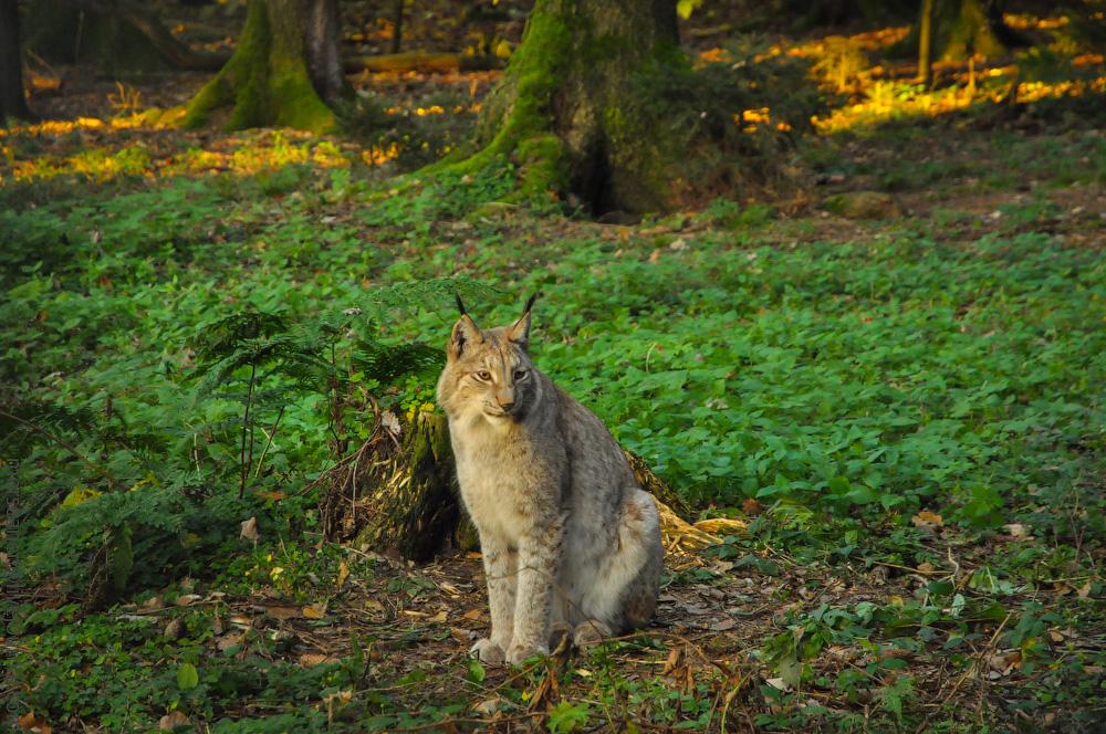 Tierpark-(12).jpg